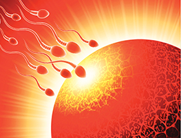 Pregnancy - Fertility - IVF - Sperm Donation