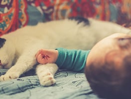 parents - kids - animals - cats